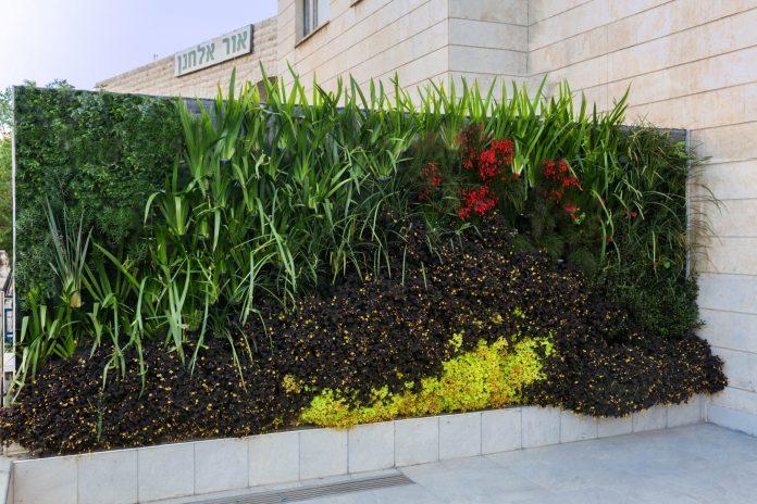 מקדמים את הטרנד הצומח – עיצוב חללים עם ריאה ירוקה